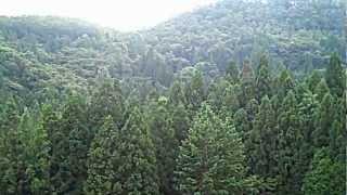 Top of green tea field in Bo-sung, South Korea
