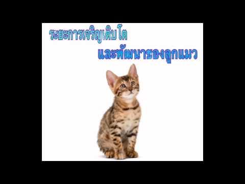 การเลี้ยงแมว:การเจริญเติบโต และพัฒนาการของลูกแมว
