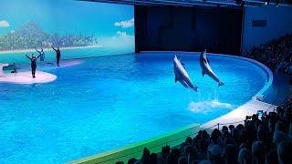Шоу Дельфинов в Кольморденском зоопарке, Швеция