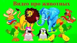 Видео про животных  детям