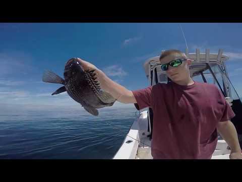 Fun Day Sea bass Fishing N.J