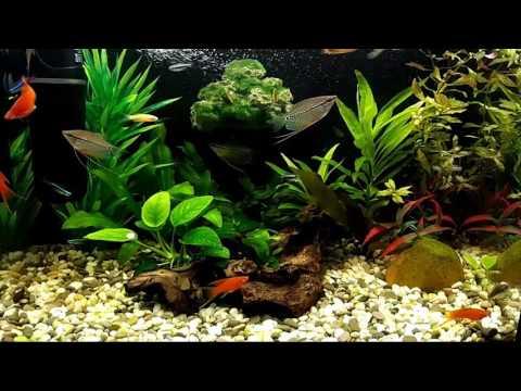 Мой любимый аквариум 60 литров