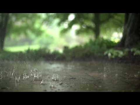 1 Hour Rain & Thunderstorm Sounds | Relaxing Storm Ambience
