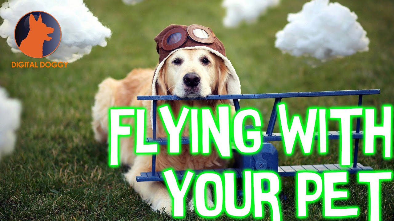 Watch 7 Tips for Traveling with Your Pets video