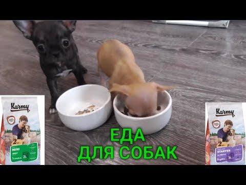 КАК перейти на Новый сухой корм для собак*Обзор Корма Карми,Отзывы корм karmy