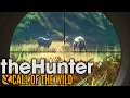 Rare Cinnamon Black Bear Hunting! - TheHunter: Call of the Wild Gameplay