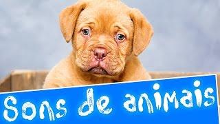 Sons de animais | Aprender sons de animais em português