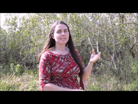 WorthPoint Success Story - Elena Uses Ask A Worthologist to find hidden treasure