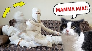 Reanimated Mummy of Toilet Paper. The Cat's Reaction