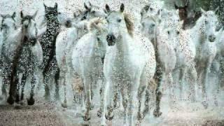 grupo laberinto mix corridos de caballos dj gavilan