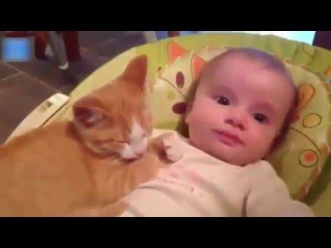 Komik Kediler, Komik Bebekler Ve Komik Vine Videoları
