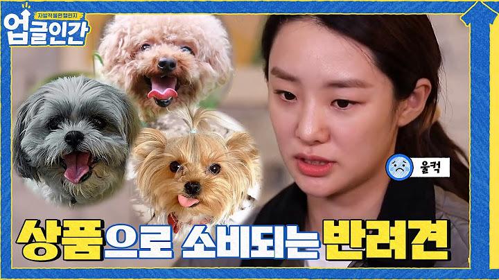 (울컥) 반려견을 상품으로 사고 파는 문화의 어두운 이면#업글인간 | upgrademyself EP.1 | tvN 210403 방송