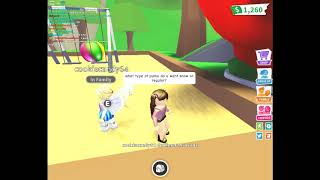 Second Vid roblox adopt me Getting a chocolate lab from cookiecandy64