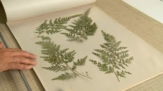 How to Create a Framed Leaf Pressing| P. Allen Smith Classics