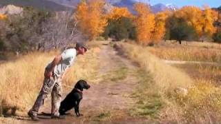 Waterfowl Dog Training