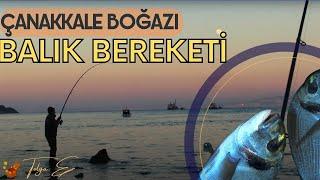 Çanakkale Boğazı Bereketi (Mart 2018 Balık Avı)