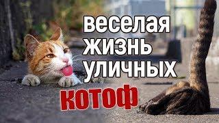 Веселая жизнь уличных котов!