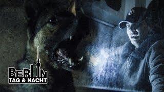 Todesangst 💀 Nik wird von Kampfhund attackiert 🐕 ☠️⚡ #1949 | Berlin - Tag & Nacht