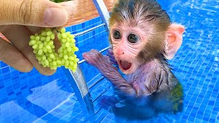 Monkey Baby Bon Bon harvest fruit in the garden and eat with puppy and duckling at the pool