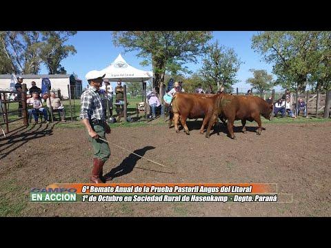 Julian Pessolani - Director Angus Litoral - 3° Jura Fenotípica de la 6ta. Prueba Pastoril Angus del Litoral