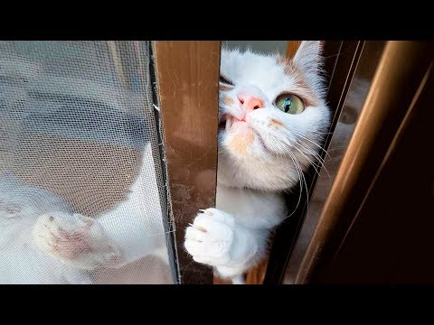 Funniest  Cats and  Dogs  Awesome Funny Pet Animals' Life Videos