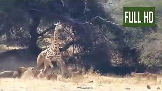 【野生動物の世界】キリンVSライオンの死闘対決。衝撃映像。!!!! Playli...