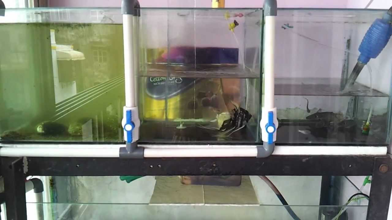 Aquarium water drain system youtube for How to keep fish tank clean without changing water