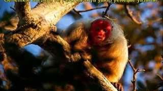 Dünyanın En İlginç ve En Bilinmeyen 10 <b>Hayvanı</b>