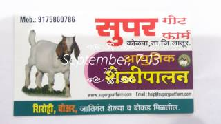 Sheli Palan in Maharastra - Super Goat Farm