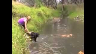 Dogs Learning To Swim - The Dog Bus