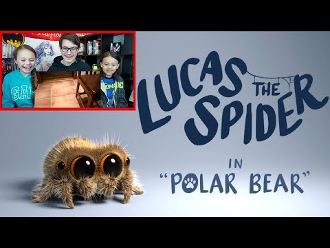 Lucas the Spider - Polar Bear Reaction!!! Sooo Cute!