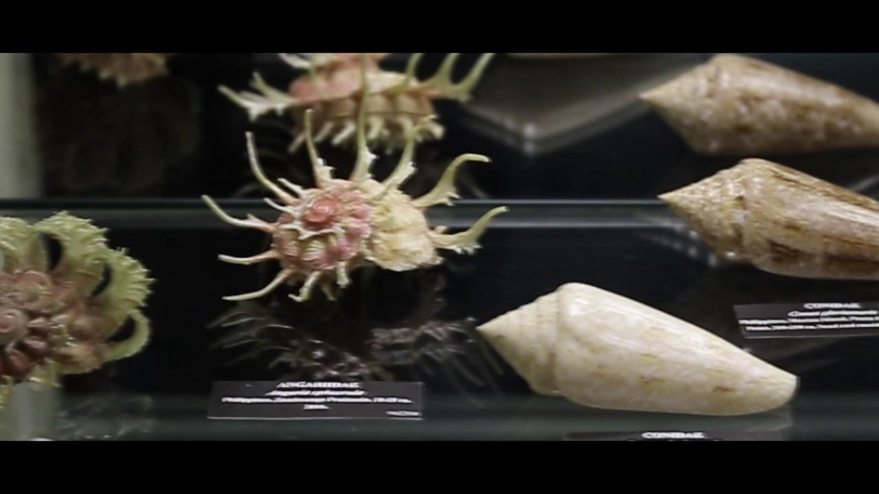 Short Film Documenting Conchology Inc