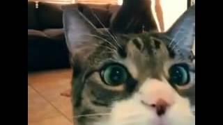Кот попал в кадр