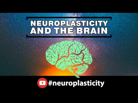 neuroplasticity-and-the-brain