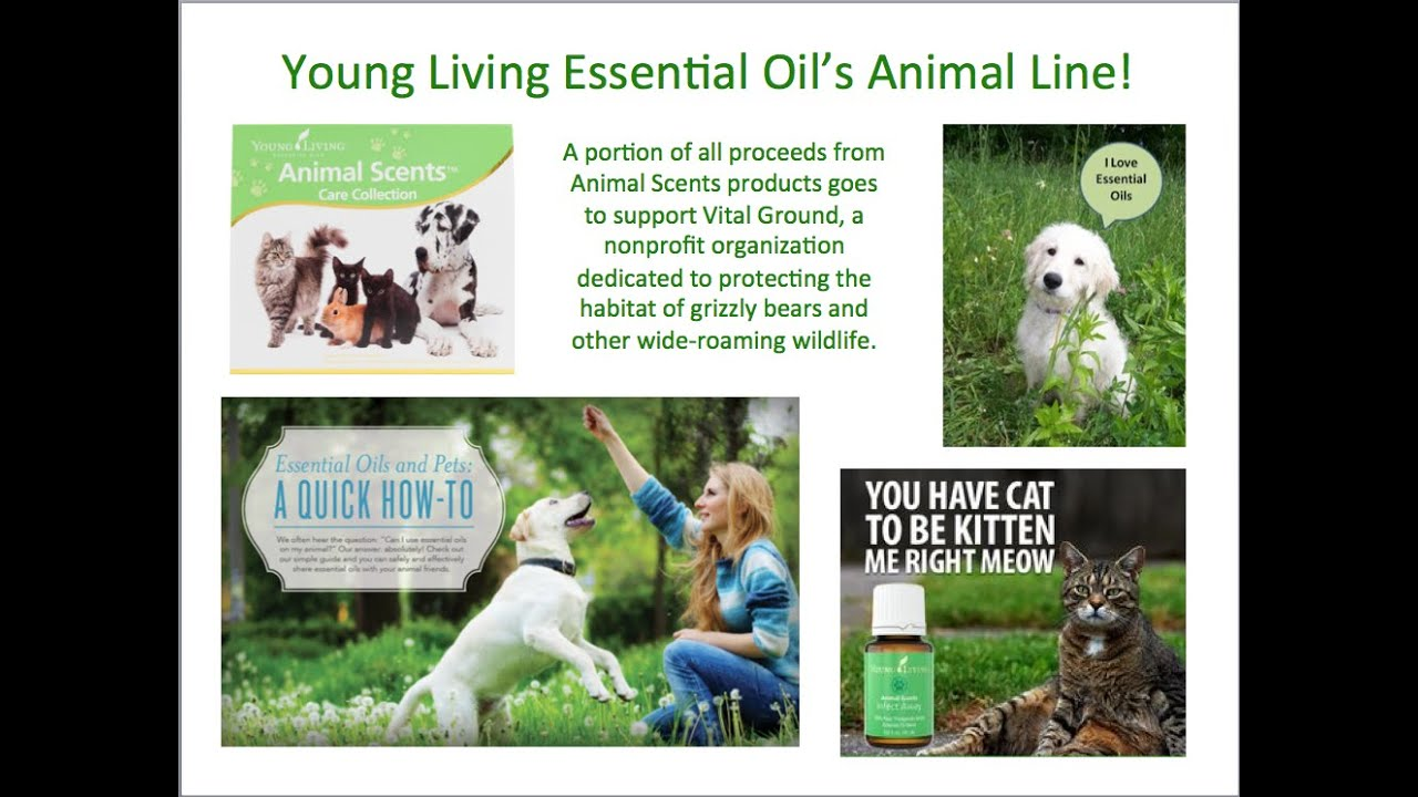 Introduction To Young Living Essential Oils And Animal