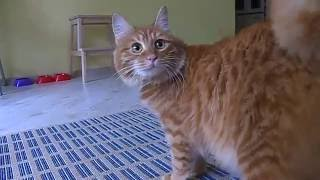 В Международный день кошек поздравляем наших мурлыкающих питомцев