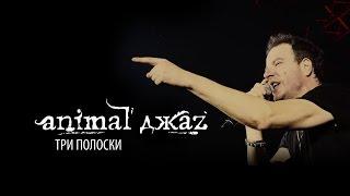 Animal ДжаZ - Три полоски - ALL STAR TV 2015