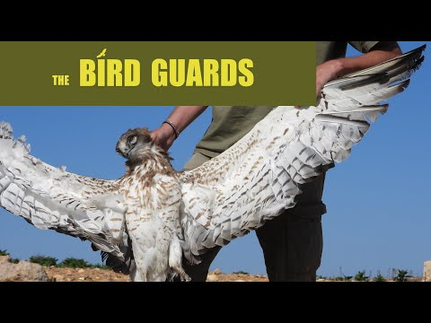 The Bird Guards - The fight against illegal bird poaching in Lebanon (CABS, SPNL, MESHC, ABCL)