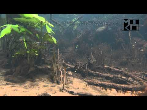 Amazon Tropical River Underwater Stock Video Footage 14