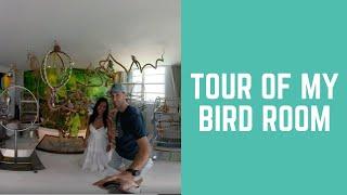 TOUR OF MY BIRD ROOM - 360 VIRTUAL REALITY VIEW