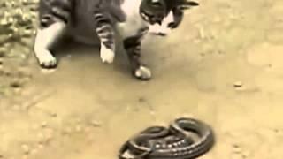 Кот и змея. Жестокая драка до смерти.