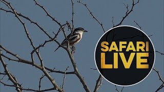 safariLIVE - Sunrise Safari - 2018, 21. June