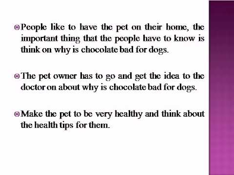 Is White Chocolate Bad For Dogs
