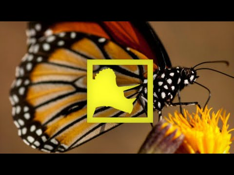 Jurassic Insects Mimicked Butterflies | Prehistoric News