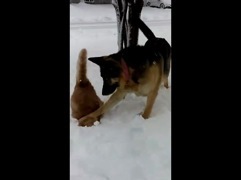 "Dog Pushes Cat's Face In Snow! ""Hey Look! Snow!"""
