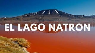 El Lago Rojo Animales Petrificados y Muerte (LAGO NATRON)