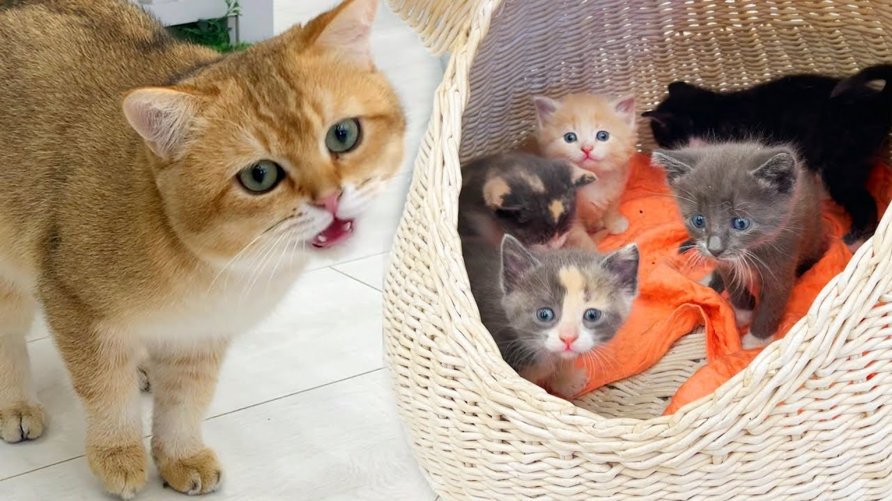 Daddy cat hisses at kittens in a basket.