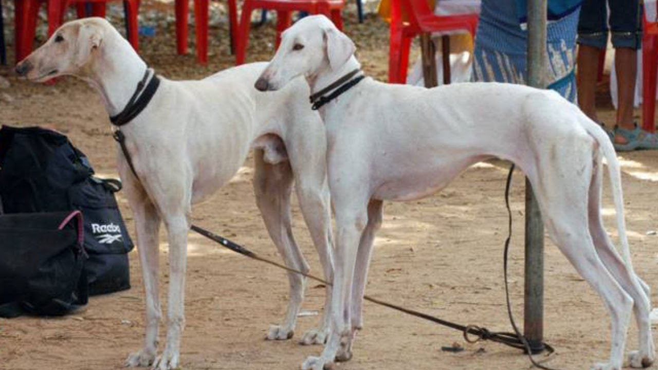 Indian Army Dog Breeds