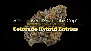 2015 Denver Cannabis Cup: Colorado Hybrid Entries