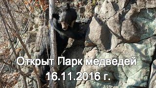 Открыт Парк медведей 16.11.2016 г.